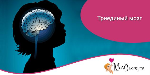 Триединый мозг
